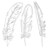 Feathers illustration Stock Photography