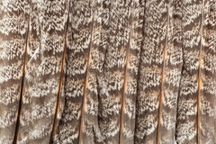 Feathers isolated on white. Tail feathers of ruffed grouse isolated on white background Royalty Free Stock Photography