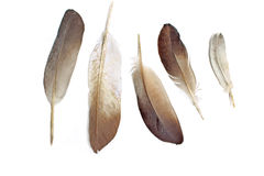 Feathers isolated Stock Photography