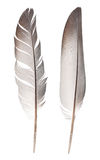 Feathers. Isolated on white background Stock Images