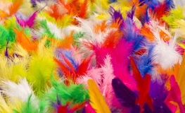 Feathers Jianzi Stock Image