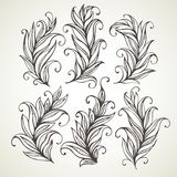 Feathers leaves. Hand drawn illustration Stock Photography