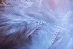 Feathers, macro photo royalty free stock photos