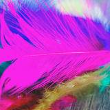 Feathers Stock Photo