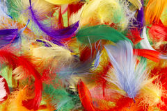 Feathers Royalty Free Stock Images
