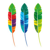 Feathers multicolored carnival icon Stock Photo
