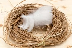 Feathers in the nest Royalty Free Stock Photos