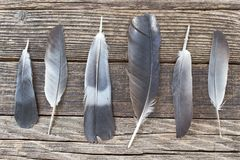 Feathers on wooden background Stock Images