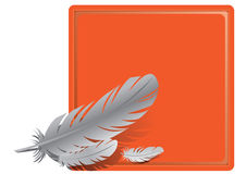 Feathers on an orange background Stock Images