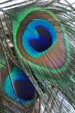 feathers peacock Στοκ Φωτογραφία