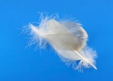 Feathers of pigeon Royalty Free Stock Photo