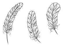 Feathers and quills Royalty Free Stock Photos