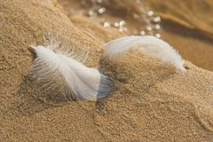 Feathers on Sand Stock Images