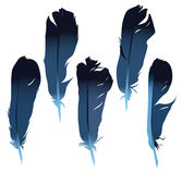 Feathers set Royalty Free Stock Photos