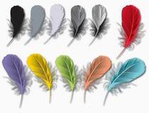 Feathers set Stock Image