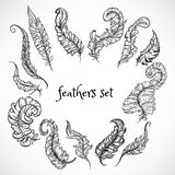 Feathers set. Collection of retro black and white hand drawn vector illustration. Royalty Free Stock Photography