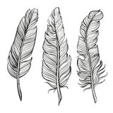 Feathers set hand drawn vector llustration Stock Photo