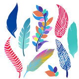 Feathers Royalty Free Stock Image