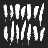 Feathers silhouettes set Stock Photo