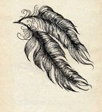 Feathers Sketch Stock Photography