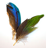 Colorful Duck Feathers. Feathers that came from a Mallard duck stock photography