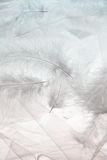 Feathers and tulle Royalty Free Stock Photography
