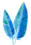 Feathers. Two bird feathers  on white background, watercolor illustration and  paper texture Stock Images