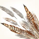 Feathers vector background. Background with vector realistic multicolored feathers Stock Photography