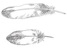 Feathers + vector EPS file Royalty Free Stock Image
