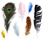 Feathers, vector icons Royalty Free Stock Photos