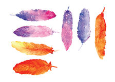 Feathers Water colors Painting Vector Stock Image
