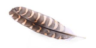 Feather on white background royalty free stock photos