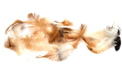 Feathers on a white background royalty free stock images
