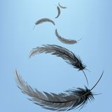 Feathers in the wind Royalty Free Stock Photos
