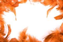 feathery рамка стоковые фотографии rf