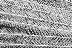 Feathery background Royalty Free Stock Images