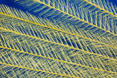 Feathery  background. A yellow and blue  background of feathery textured material Royalty Free Stock Photography