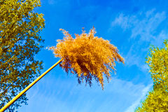 Feathery flower head of a pampas grass plant. Under bright blue sky Royalty Free Stock Image