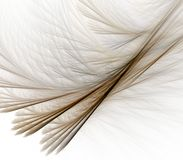 Feathery Layers Abstract Stock Photos