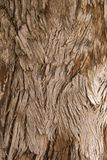 Feathery wooden texture Royalty Free Stock Images