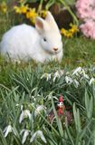 Feature photo easter Royalty Free Stock Photos