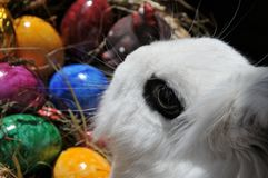 Feature photo easter Royalty Free Stock Photography