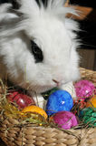 Feature photo easter. With easter eggs and white bunny Stock Photo