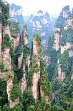 Featured mountain in China, Zhangjiajie. Steep and slim mountain and rocks, with attached green plant, the featured physiognomy locate in zhangjiajie, hunan Stock Image