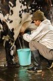 Feb-2005, Anden, Ecuador, agricoltore munge una mucca nelle Ande nell'Ecuador Fotografia Stock Libera da Diritti