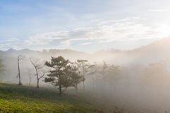 18, Feb Dalat-Nebel 2017 über der Kiefer Forest On Sunrise Background und beautyful Wolke in Dalat- Lamdong, Vietnam Lizenzfreies Stockbild