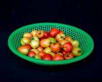 22, Feb 2017 Dalat- pomidorowe owoc na zielonym plastikowym koszu, czarny tło Obrazy Stock