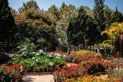 Tourists at Colourful Flower garden Truc Lam Da Lat Zen Monastery. FEB 26, 2014 Dalat, Vietnam - Tourists enjoy photo taking with colourful flower hydrangea royalty free stock images