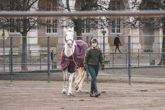 20 febbraio 2019 denmark copenhaghen Adattamento di formazione di esclusione di un cavallo nella stalla reale del castello Christ fotografie stock libere da diritti