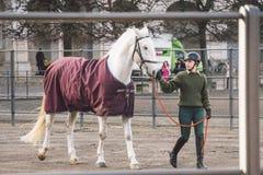 20 febbraio 2019 denmark copenhaghen Adattamento di formazione di esclusione di un cavallo nella stalla reale del castello Christ immagini stock